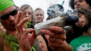 Marijuana Country The Cannabis Boom - Documentaries About Drugs