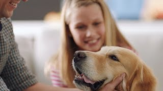 We Love Our Pets: PetComfort Commercial YouTube video