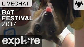 Bat Festival 2017 - Organization For Bat Conservation - Live Chat