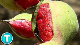 Top 10 Fruits You