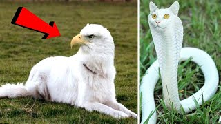 10 Amazing Animals