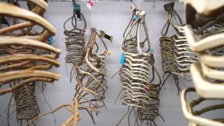 Furniture Naturally Grown From A Tree: Tree Shaping