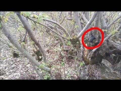 ЧУПАКАБРА СЛУЧАЙНО СНЯТО НА КАМЕРУ странное существо в лесу 2019. чупакабра 2019 загадочное существо