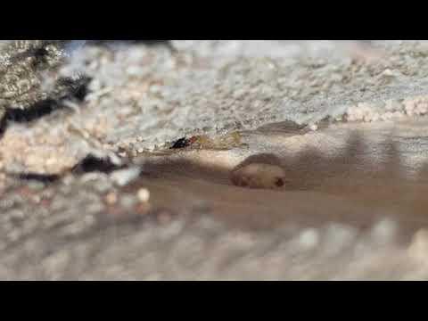Drywood Termites in Princeton, NJ