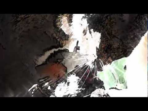 Free Dubstep Download Predator, JonnyShanahan at PumpYouUp.com