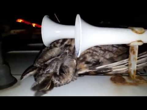 сбил сову