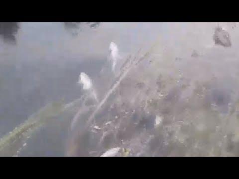 Фарит Гумеров рассказал о сложившейся ситуации на реке Изяк Благовещенского района