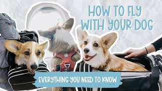 Flying With Your Dog in Cabin in 2021 (NON ESA) | My Experience Bringing My Corgi on a Plane