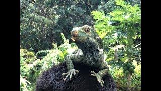 Kula Wild Adventure Park, Fiji