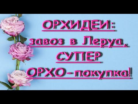 """ЗАВОЗ орхидей в ЛЕРУА:шикарная """"БАБОЧКА"""",мечта сбылась!ТЦ""""Космопорт"""",Самара,31.07.20."""