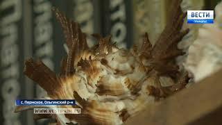 Боцман из села Пермское собрал в морских походах грандиозную коллекцию раковин