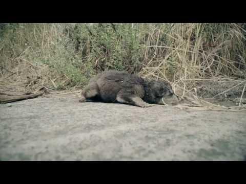 Video terribile con parassiti