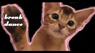Котёнок Ариела танцует брейкданс | до слёз