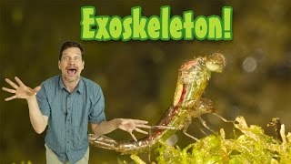 Whats An Exoskeleton? Kids Animal Science, Insect Growth, Elementary Science Vocabulary