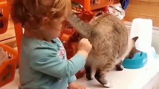 Котики и кошки, Приколы с котами,  Смешные видео про котов котят и кошечек 2018