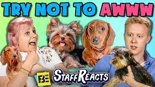TRY NOT TO AWWW CHALLENGE w/ REAL PUPPIES!! (ft. FBE Staff)