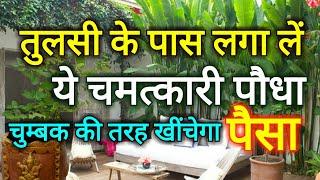 तुलसी के पौधे के पास लगा लें यह चमत्कारी पौधा, चुंबक की तरह पैसे को खींचता है ये पौधा Tulsi- YouTube