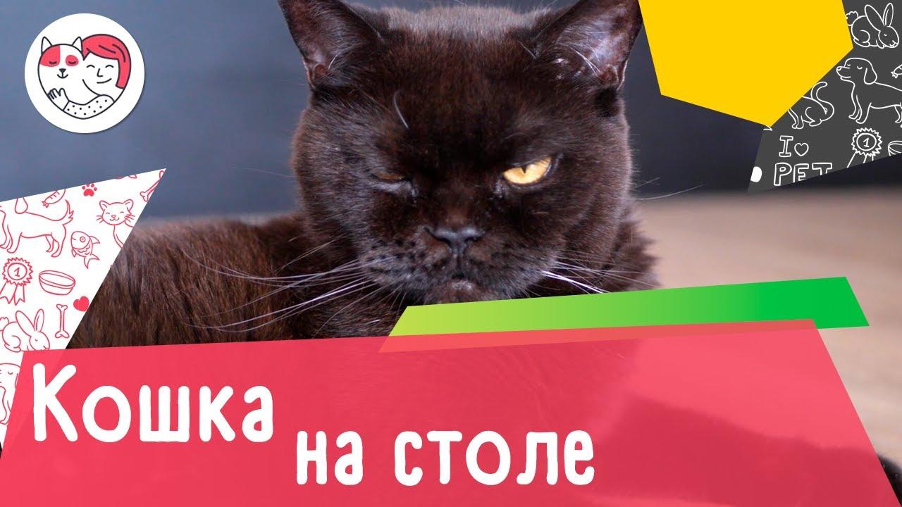 4 совета, как отучить кошку забираться на стол