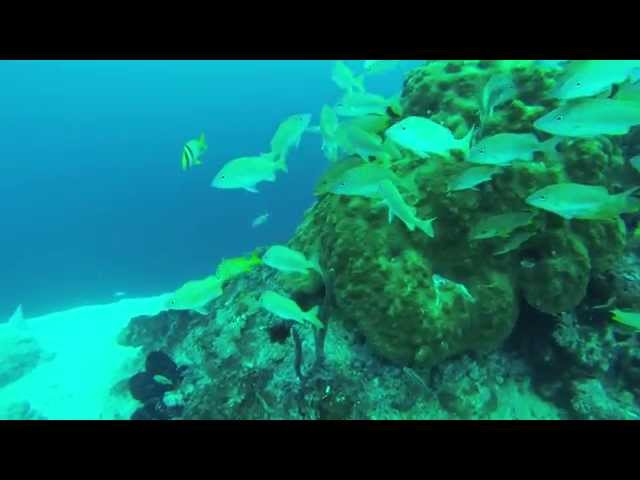 Lost Blue Hole & Barracuda Reef Dives With Bahama Divers
