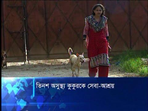 অসুস্থ পথের কুকুরকে চিকিৎসা দিয়ে আদর যত্নে সুস্থ করে টিয়া | ETV News