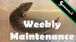 Weekly Maintenance for Blue Tongue Skinks - Ep. 31