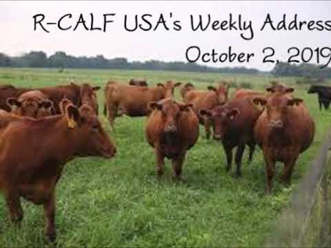 Cattle Price Rally