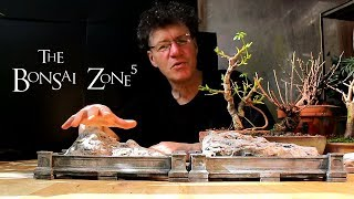 Bonsai Work In The March Break, Part 2, The Bonsai Zone, March 2018
