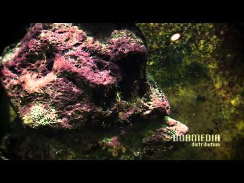 Zoo Aquarium - Science O.C.N. - Grains Of Dust