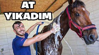 1 GÜNLÜĞÜNE AT BAKICISI OLDUM!! videomuz sizlerle. Arkadaşlar bugün Antalya Atlıspor ve Binicilik Klübünde At bakıcılığı yani seyislik yaptım. Bir atın ne ihtiyacı varsa her şeyiyle ilgilendim. Çok güzel bir o kadar da eğlenceli bir video oldu. İyi seyirler.  Fester Abdü  https://www.instagram.com/delimine  İrtibat & İşbirliği: Türkiyenin En Çılgın YouTube Kanalı delimine@creatorstation.com