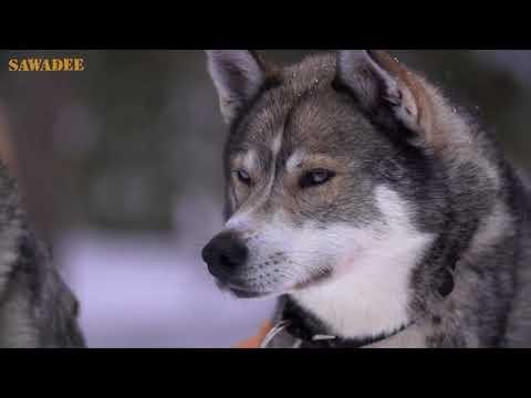 Video Finland