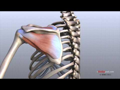 Che può mettere un blocco della colonna vertebrale cervicale