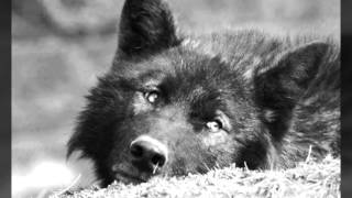 Bathory-Foreverdark Woods