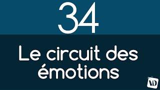 Vignette de Comment fonctionne le circuit des émotions ?
