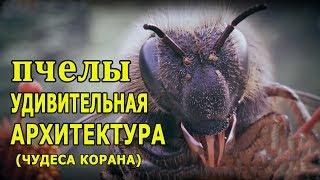 Медовые пчелы - удивительная архитектура (чудеса Корана).