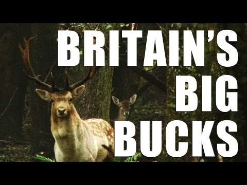 Fieldsports Britain – How to call in great big bucks  (episode 152)