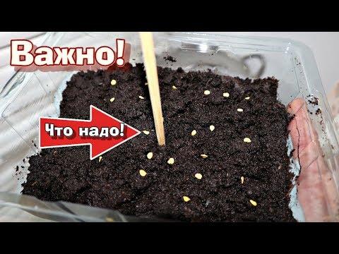 Сейте перец и томаты на рассаду только в эти сроки! Когда сажать перец и томаты на рассаду?