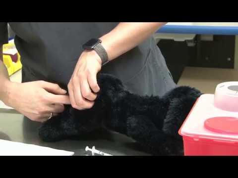 Cum să tratezi un genunchi inflamat