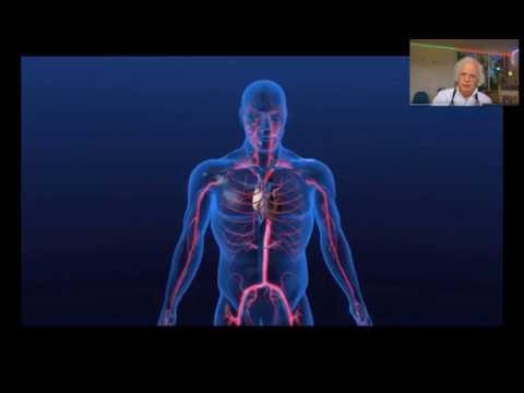Pourquoi augmentation de la pression artérielle chez les humains