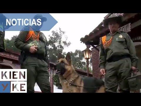 Y asi es el entrenamiento de perros antiexplosivos y antinarcoticos