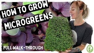 How to Grow Microgreens - Full walk-through with TIPS & TRICKS on Red Acre Cabbage!! - On The Grow