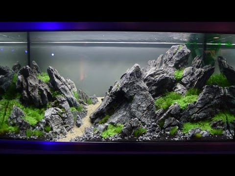 Aquascaping-Wettbewerb XL Tierwelt Magdeburg 2017