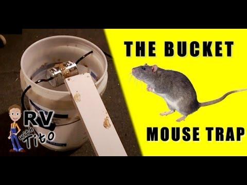 最強的老鼠陷阱... 必中!