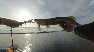 Отчеты о рыбалке в калининградской области