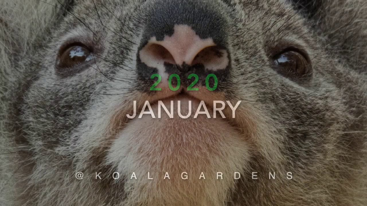 January 2020 sightings