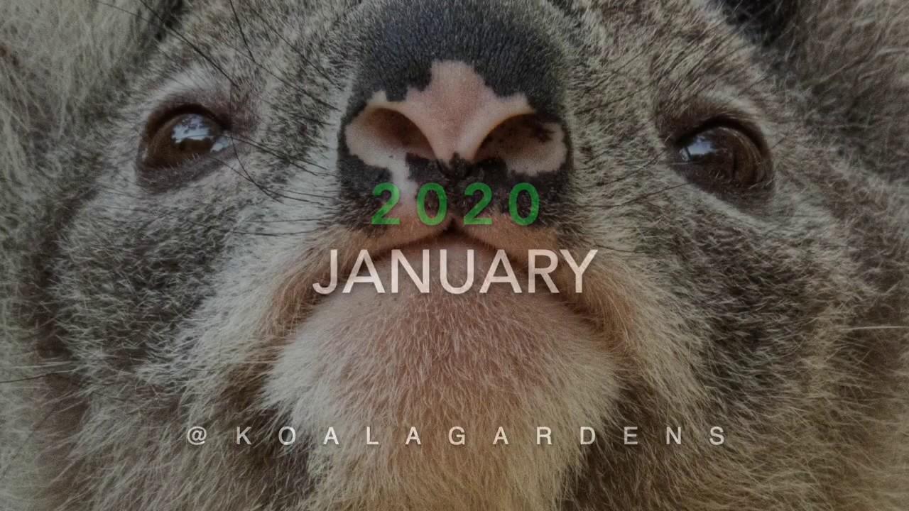 January 2020 sightings