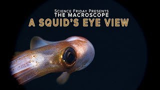 A Squid's Eye View