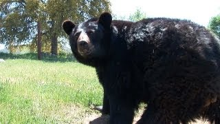 Lions Tigers & Bears - Sanctuary Spotlight