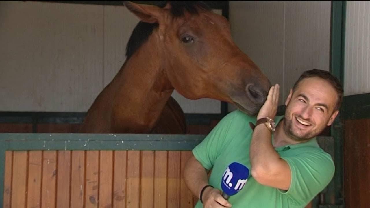 Конь мешает журналисту вести репортаж