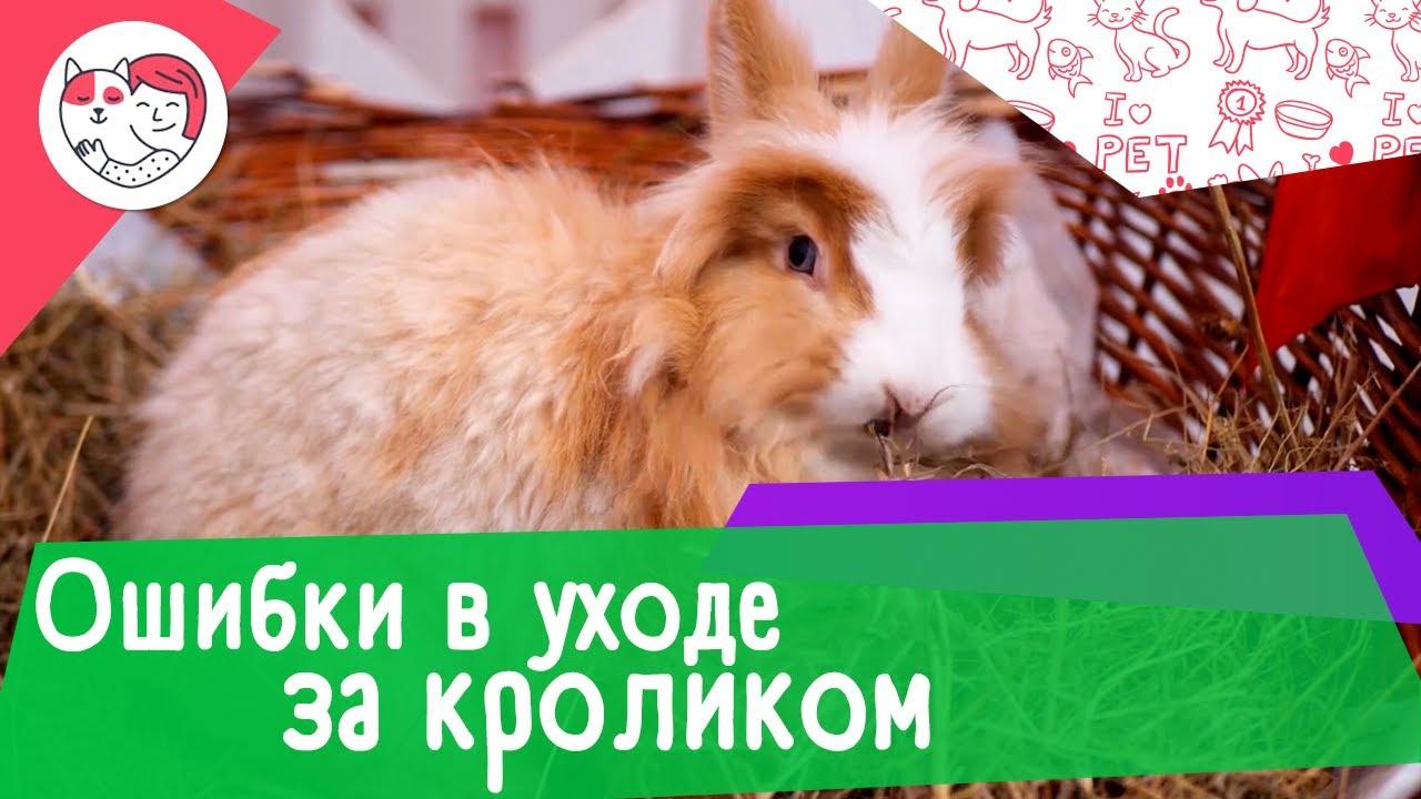 5 популярных ошибок в уходе за кроликами