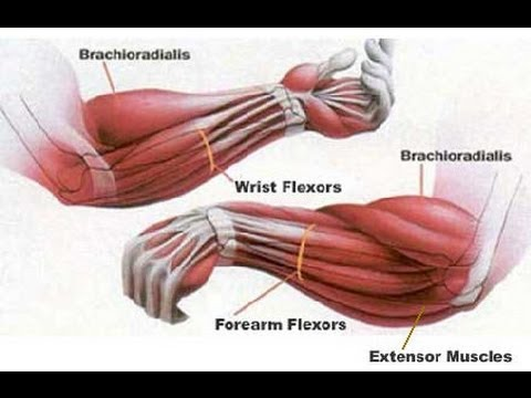 Aux muscles en relief